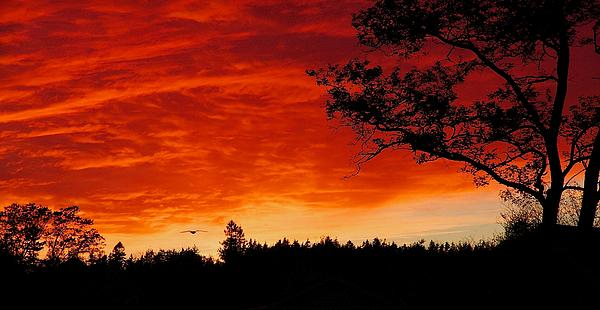 Stuart Litoff - Into the Sunset