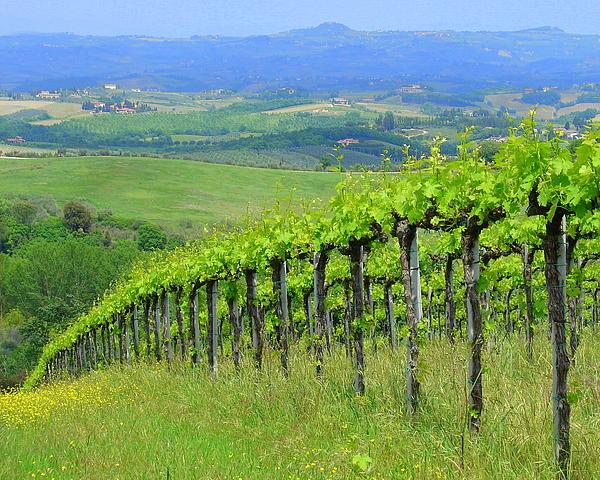 Ramona Johnston - Italian Vineyard