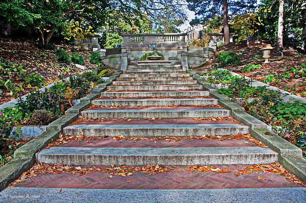 Suzanne Stout - Kalorama Spanish Steps