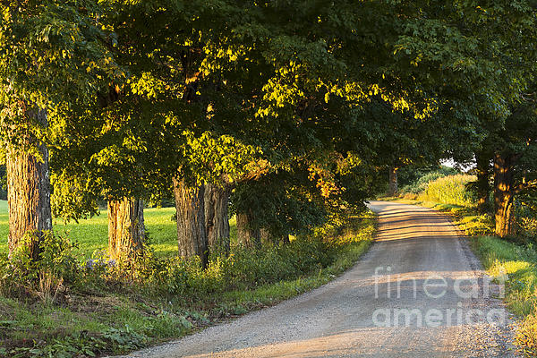 Alan L Graham - Late Summer Country Road