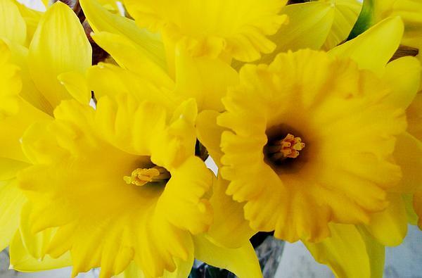 Sharon Duguay - Easter Lent Lily
