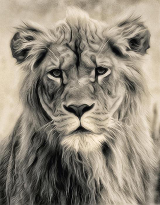 Wade Aiken - Lion