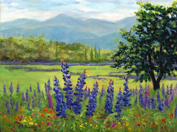 Elaine Farmer - Lupine Field, Sugar Hill, NH