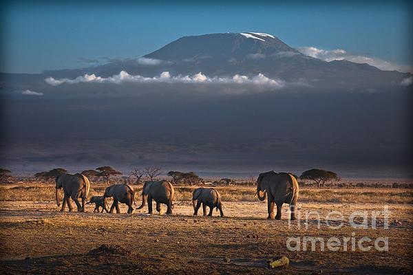 Gary Keesler - Majestic Mount Kilimanjaro - OMG