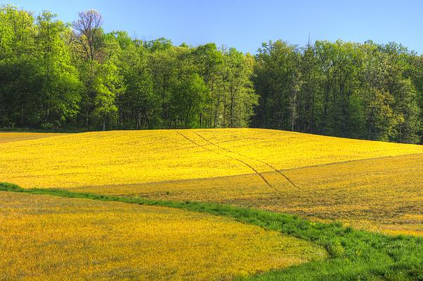 Michael Mazaika - Maryland Country Roads - Disappearing Into Gold - Farm Fields-C