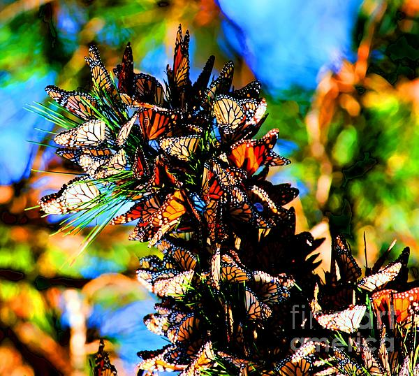Tap On Photo - Monarch Butterfly Migration