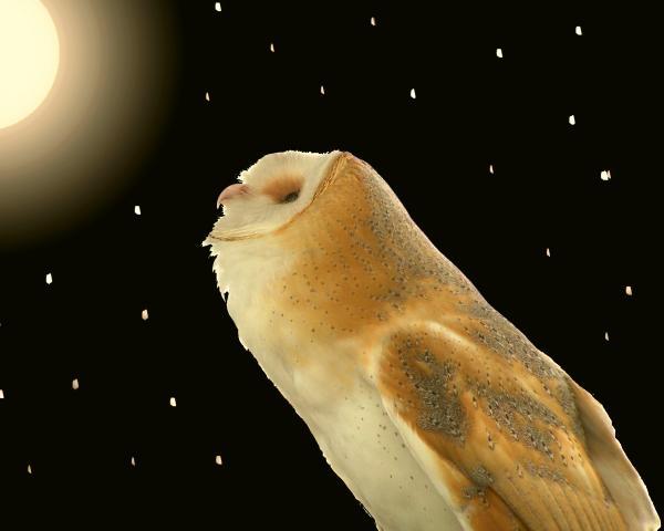 Peg Urban - Moon Owl