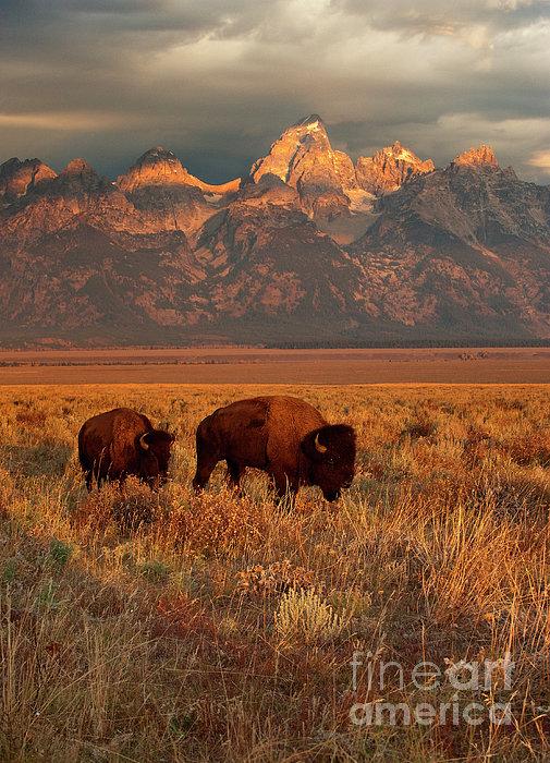 Sandra Bronstein - Morning Travels in Grand Teton