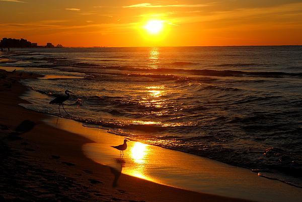 Michelle Jessee - My Tern