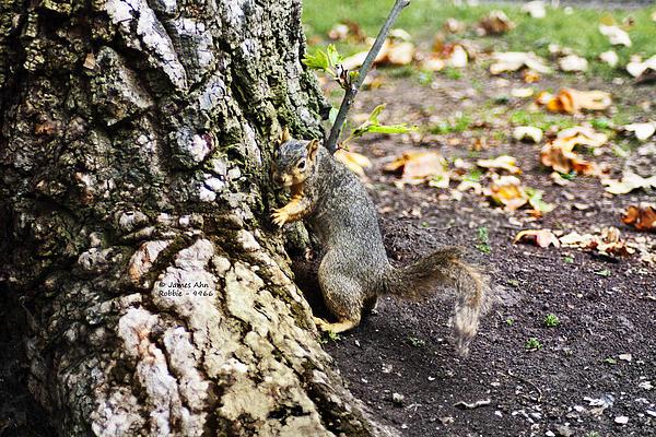 James Ahn - My Tree - Robbie The Squirrel