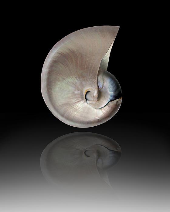 Mark Ashkenazi - Nature By The Sea