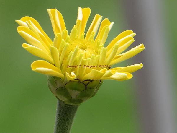 Sonali Gangane - New Bloom
