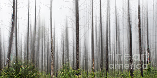 Tom Gari Gallery-Three-Photography - New Jersey Pine Barrens
