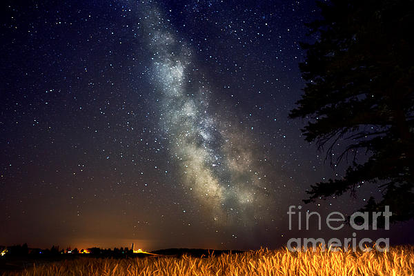 Beve Brown-Clark Photography - Night Moves