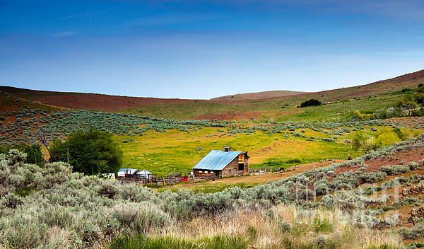 Robert Bales - Old Ranch