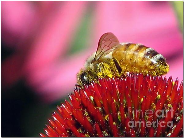 Chris Anderson - P2 The Pollenator