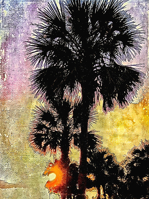 Kathy Bassett - Palm Sunset