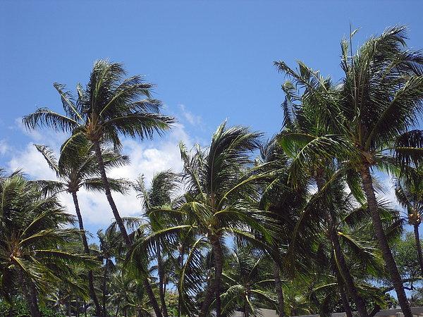 Athala Carole Bruckner - Palms In The Wind