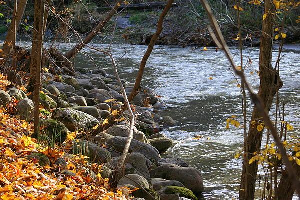 Kay Novy - Pikes Creek In Autumn