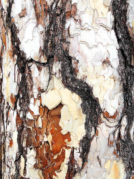 Guido Strambio - Pine bark close-up