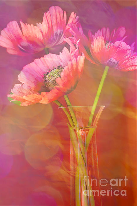 Jan Bickerton - Poppy Passion