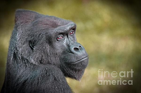 Jim Fitzpatrick - Portrait of a Gorilla