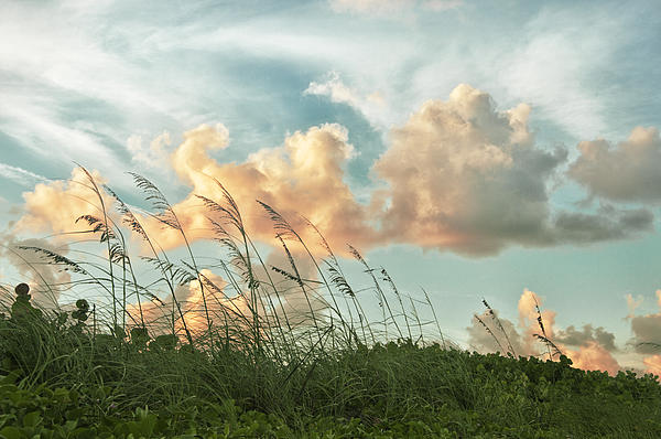 Louise Hill - Pretty Clouds and Sea Oats