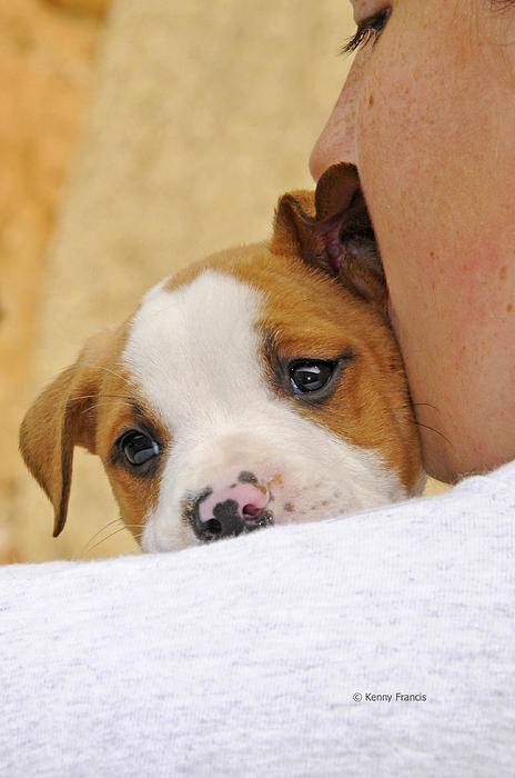 Kenny Francis - Puppy Love