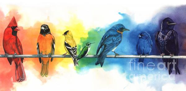 Antony Galbraith - Rainbow Birds