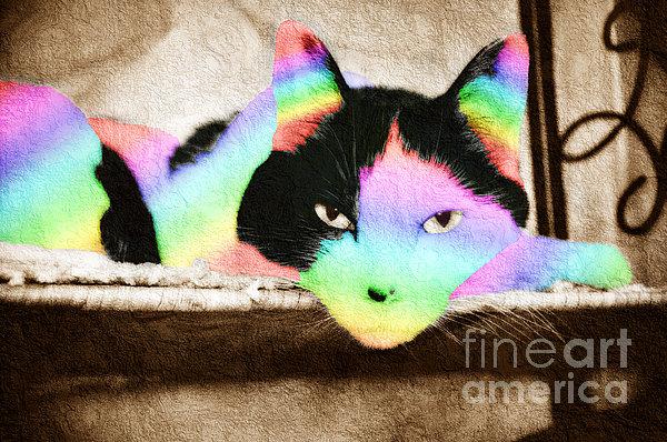 Andee Design - Rainbow Kitty Abstract