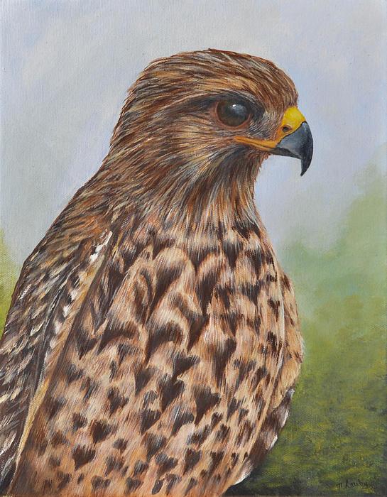 Nancy Lauby - Red Shouldered Hawk