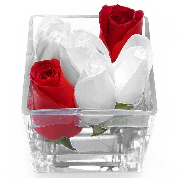 Andee Design - Red Versus White Roses