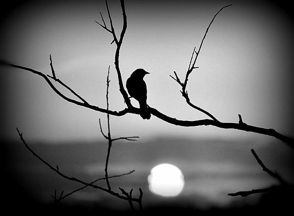 Russ Perdieu - Red Winged Sunset