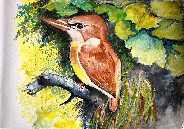 Jason Sentuf - Rofous - backed Kingfisher