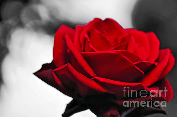 Kaye Menner - Rosey Red