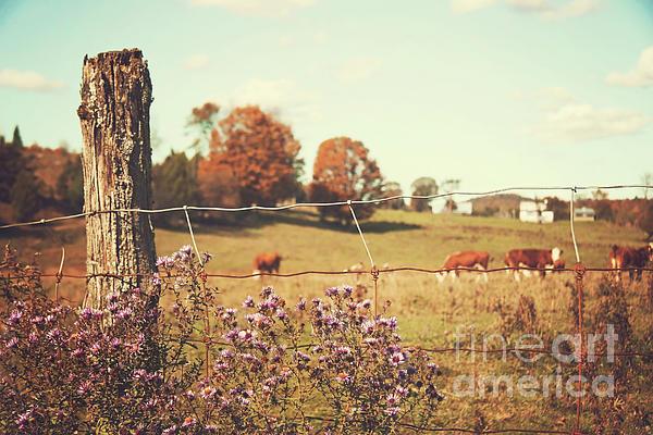 Sandra Cunningham - Rural country scene