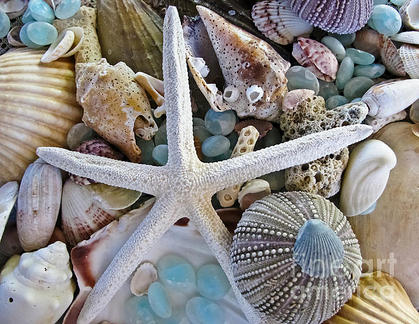 Colleen Kammerer - Sea Treasure