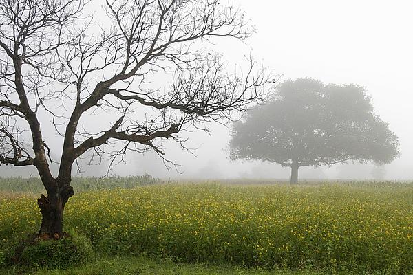 Sunil Kapadia - SKC 0058 Contrasty trees