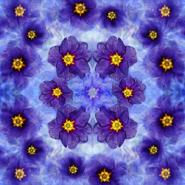 Belinda Greb - Small Purple Flowers - dark