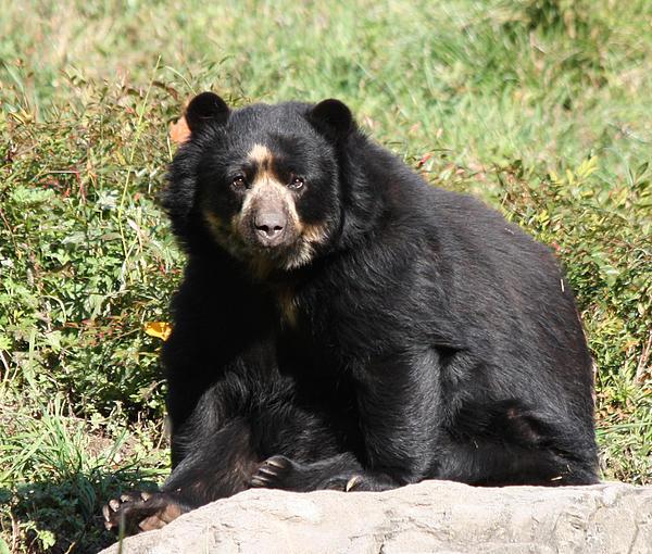 John Telfer - Speckled Bear