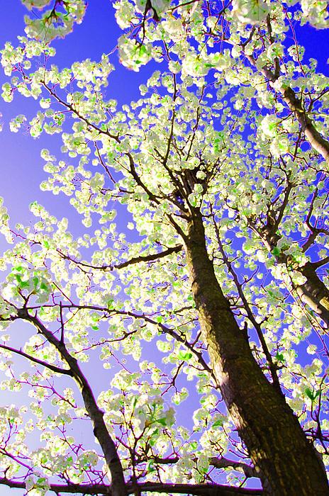 First Star Art  - Spring Blossoms