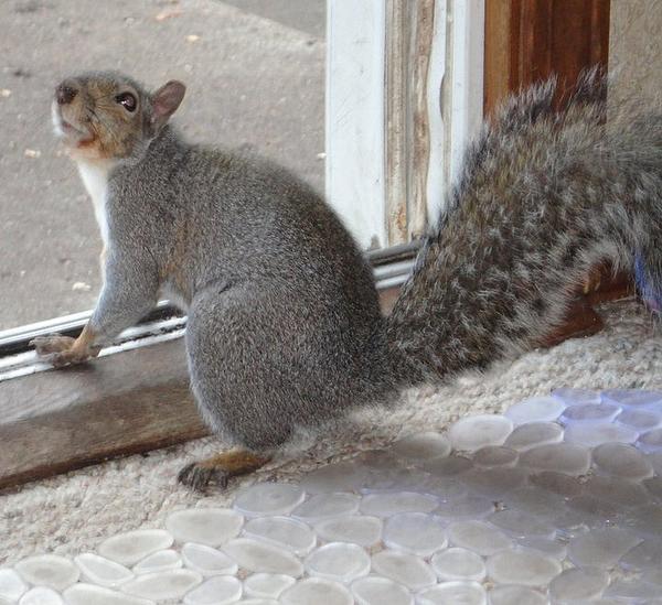 Guy Ricketts - Squirrel Greeting