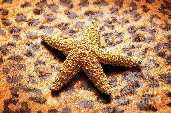 Andee Design - Starfish Enterprise