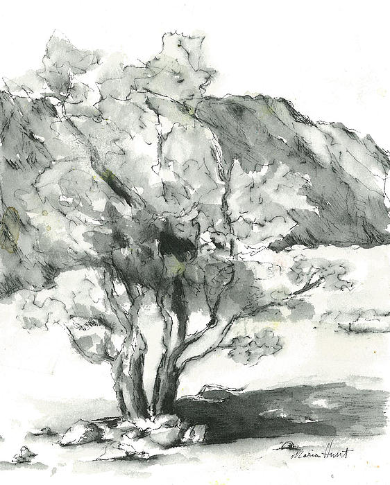 Maria Hunt - Stately Smoketree