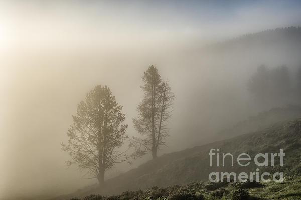 Sandra Bronstein - Summer Morning in Yellowstone