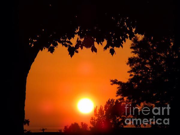 Thomas Woolworth - Summer Sunrise Right Side