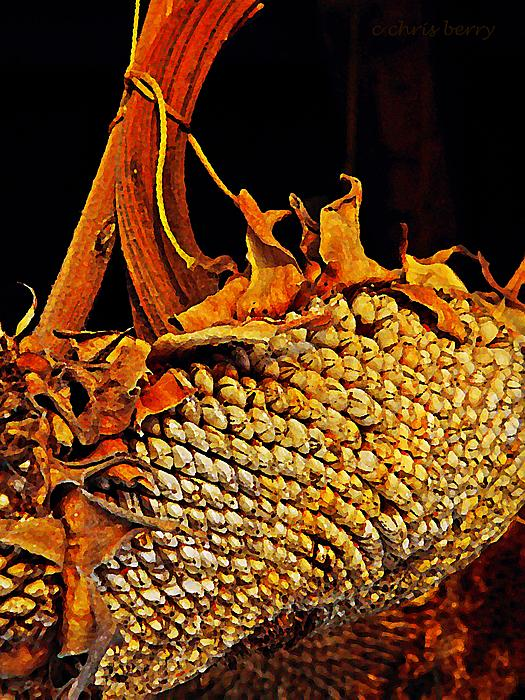 Chris Berry - Sunflower Seeds in Oils