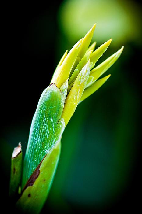 Sennie Pierson - Taste of Spring