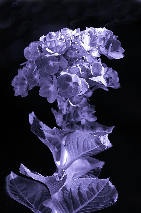 Sandi OReilly - The Color Purple