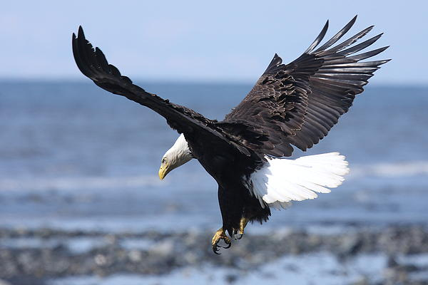 Dawn J Benko - The Eagle Has Landed